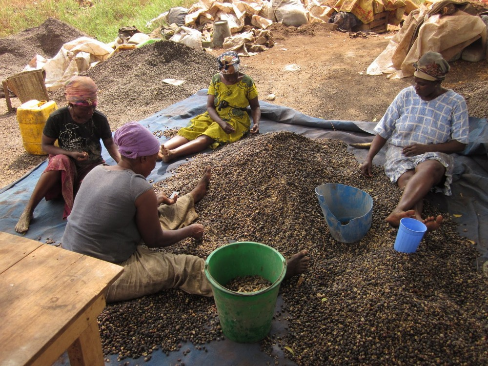 Palm Kernel Oil Extraction Business