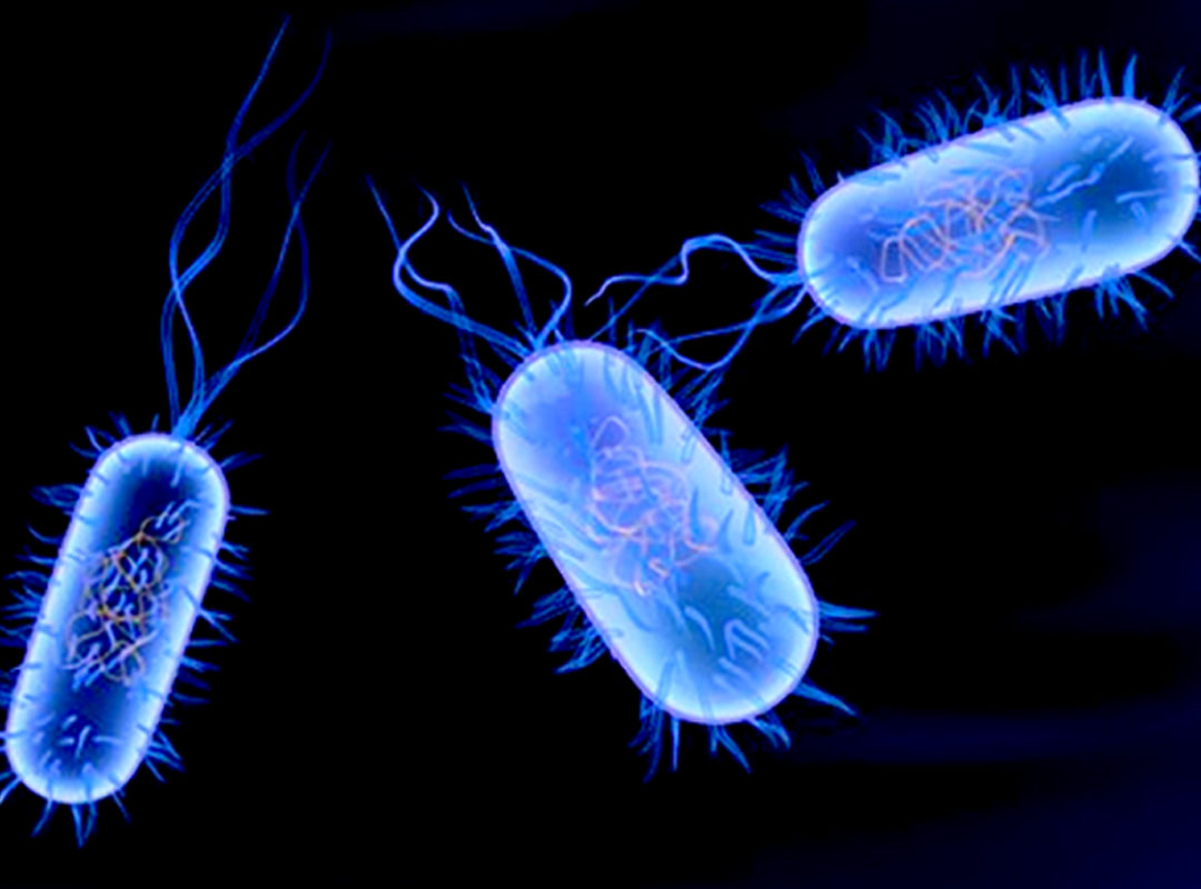 Natural remedies for Typhoid Fever